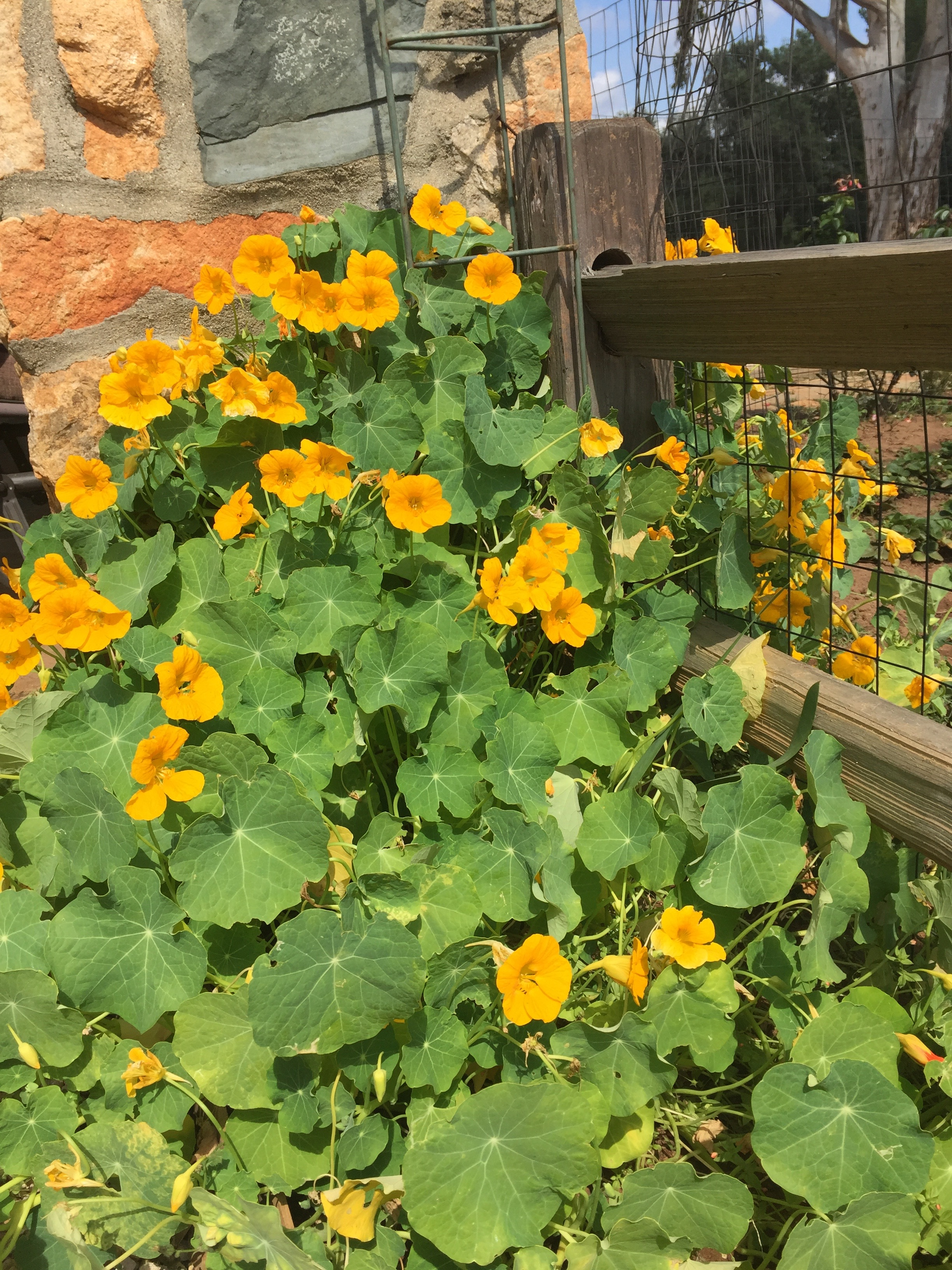 Best plants for San Diego: How does your vegetable garden grow?